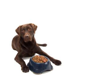 Dangerous Labrador Food