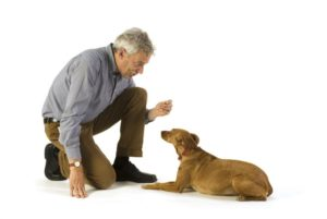 Commands For Dog Obedience