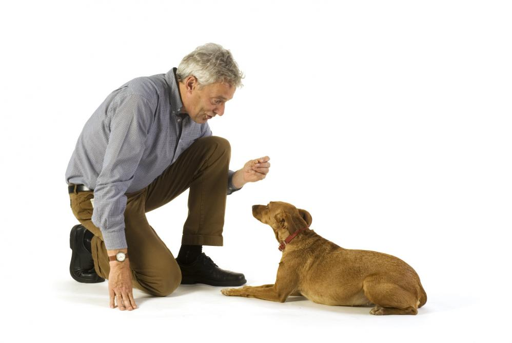 Dog Obedience Training Basic Commands