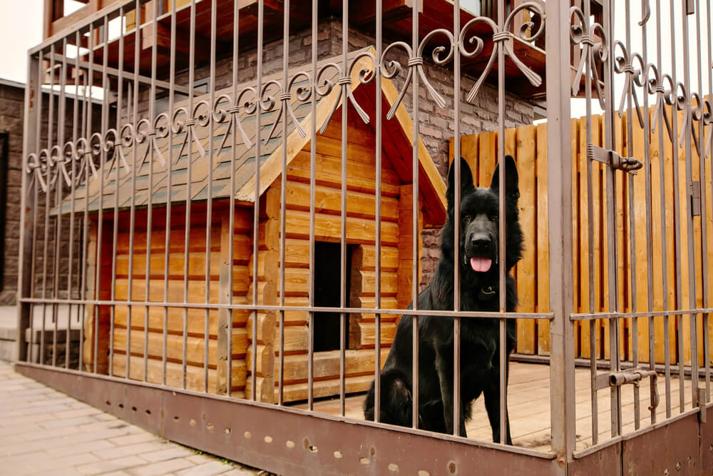 Kennel Training Your Puppy