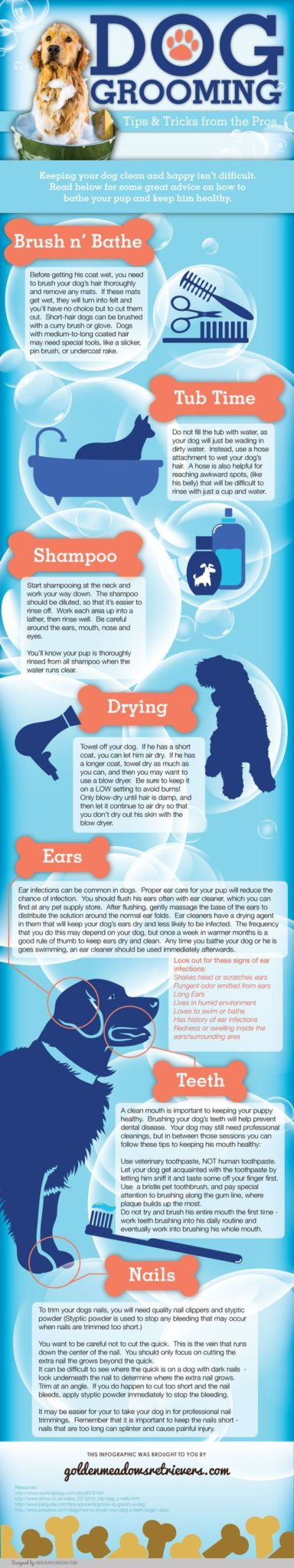 dog grooming inforgraphic